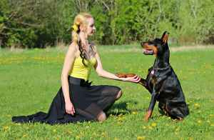 Kennel Trainer Dog Training