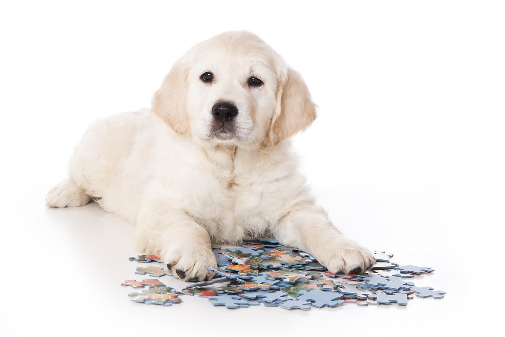 Small white pupple lays near a pile of puzzle pieces.