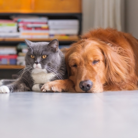 A dog and cat lay comfortably next to one another.