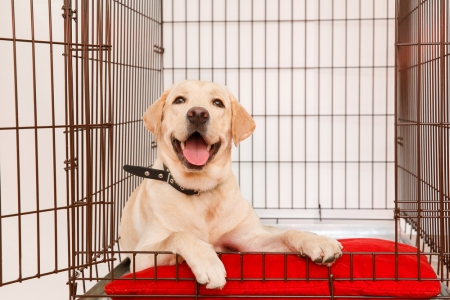 A dog happily lays in his kennel on a soft red pillow.