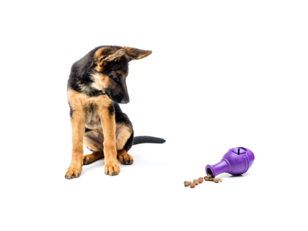 Dog sits and stares at treat dispensing dog toy.